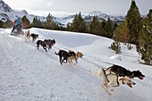 Pirena Sled dog race in the Pyrenees going through Spain, Andorra and France Grandvalira Andorra