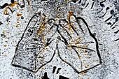 Inscription, detail of old gravestone on Jewish cemetery, Khust, Zakarpattia Oblast Transcarpathian Oblast, Transcarpathia, Zakarpattya, Subcarpathian Rus, Ukraine