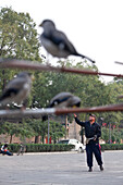 Chinese man playing with his birds, square behind the Drum Tower, aviculture, Beijing, People's Republic of China
