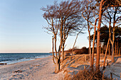 Forest at west coast, Baltic sea spa Ahrenshoop, Mecklenburg-Western Pomerania, Germany