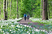 Cyclist passing riparian forest with blooming wild garlic, Leipzig, Saxony, Germany