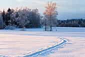 Winter scenery with cross country ski track, Upper Bavaria, Bavaria, Germany, Europe