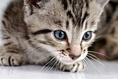 Stock photo of a kitten against a white background