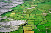 Fields on Inishmore, the largest of the Aran Islands, County Galway, Ireland Typical dry karst limestone farmland landscape