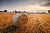 Circular hay bales in field, General, Devon, UK - England