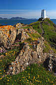 View of twr mawr lighthouse in springtime, Llandwyn Island, Anglesey, UK - Wales