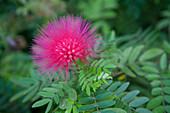 Local flora, Ocho Rios, Jamaica, Caribbean