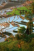 View over rice terraces, Yuanyang, China
