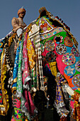 Colourful elephant with rider at the Jaipur Elephant Festival, Jaipur, Rajasthan, India