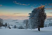 View over Hofsgrund in winter, mount Schauinsland, Freiburg im Breisgau, Black Forest, Baden-Wurttemberg, Germany