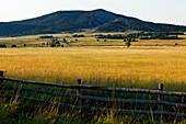 Field near Ouray, Rocky Mountains, Colorado, USA, North America, America
