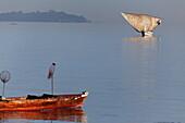 Dhow sailing near the shore, Stonetown, Zanzibar City, Zanzibar, Tanzania, Africa