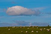 Landschaft nahe Dufftown, Aberdeenshire, Schottland