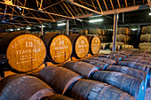 Warehouse full of oak barrels at the Glenfiddich Destillery, Dufftown, Aberdeenshire, Scotland