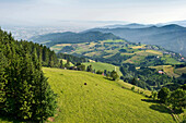 Low mountain range scenery near Freiburg im Breisgau, Black Forest, Baden-Wurttemberg, Germany