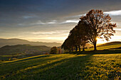 Deciduous trees in sunset, Sankt Peter, Black Forest, Baden-Wurttemberg, Germany