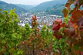 Blick über Weinberge auf Dernau, Ahrtal, Ahr, Eifel, Rheinland-Pfalz, Deutschland, Europa