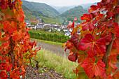 View over vineyards at Mayschoß, Ahr valley, Ahr, Eifel, Rhineland-Palatinate, Germany, Europe