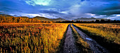 Track at Kochelsee moor in the evening sun and view of Jochberg, Herzogstand and Heimgarten, Upper Bavaria, Germany, Europe