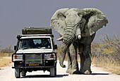 Off road vehicle next to an elephant, Etosha National Park, Namibia, Africa