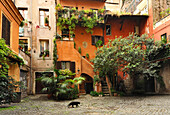 Cat passing back courtyard, Rome, Lazio, Italy