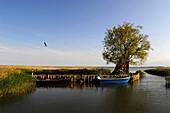 Fisching boats in harbor, Zempin, Achterwasser, Usedom, Mecklenburg-Western Pomerania, Germany