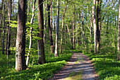 Path through a deciduous forest, Upper Bavaria, Germany