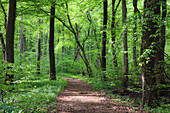Path through deciduous forest, Upper Bavaria, Germany