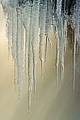 Canada, Cold, Coldness, Colors, Colour, Environment, Environmental, Flow, Flowing, Formation, Freezing, Frozen, Hanging, Ice, Icicles, Icy, natural, Nature, Outdoors, Québec, Season, Snow, Stream, Vertical, Water, Winter, XY8-1100750, agefotostock