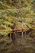 Scotland, Scottish Borders, Alemoor Loch Mirror reflection of woodland in the still waters of the Alemoor Loch
