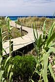 Walkway, Formentera, Spain