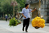China guangxi yangshuo a woman carrying a very heavy load of pumpkin flowers sold for sauces at the village market