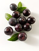 Acai Berries anti oxident fruit loose on a white background ready to cut out