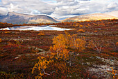 Landscape north of the arctic circle, Saltdal, Junkerdalen national park, trekking tour in Autumn, Fjell, Lonsdal, close to Mo i Rana, Nordland, Norway, Scandinavia, Europe