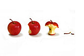 Eating Away at An Apple, Autumn Fruit, the Different Stages in Life