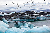 Flight of Seagulls Over the Icebergs on Lake Jokulsarlon, An Extension of the Vatnajokull Glacier Or Glacier of Lakes, the Largest Icecap in Iceland, Possibly Even Europe