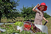 Gathering Fruits and Vegetables, the Gardens of Imbermais, Eure-Et-Loir (28), France