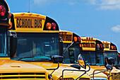 Rows of School Buses, Bradenton, Florida, United States