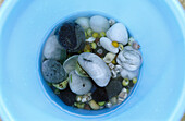 Seashells in blue bowl, directly above