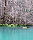 Tranquil Stream Through Forest in Winter, Washington, USA