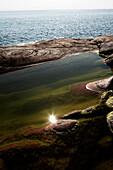 Algae in Tidal Pool, . Sweden