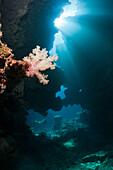Sunbeam in Underwater Cave, Namena Marine Reserve, Fiji