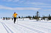 Woman cross country skiing in trail, Lillehammer, Oppland, Norway
