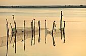 Birds and poles, backwater near Krummin, Mecklenburg-Western Pomerania, Germany