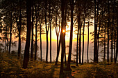 View of beech trees and sunrise at the sea, Ruegen island, Jasmund National Park, Baltic Sea, Mecklenburg-West Pomerania, Germany, Europe