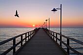 Seagull above the pier at sunrise, Bansin seaside resort, Usedom island, Baltic Sea, Mecklenburg-West Pomerania, Germany, Europe