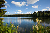 Rappbode reservoir near Hasselfelde, Harz mountains, Saxony-Anhalt, Germany