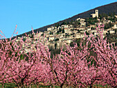 France, Rhone-Alpes, Drome, Mirmande, general view, peach trees