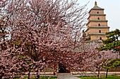 China, Shaanxi, Xian, Giant Wild Goose Pagoda