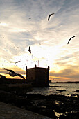 Birds Flying Over  Water and Fortified Wall, Essaouira, Morocco